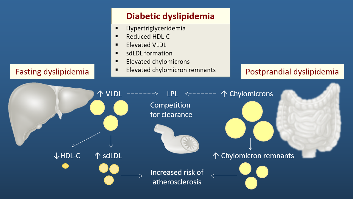 Figure showing the mechanisms of dyslipidemia