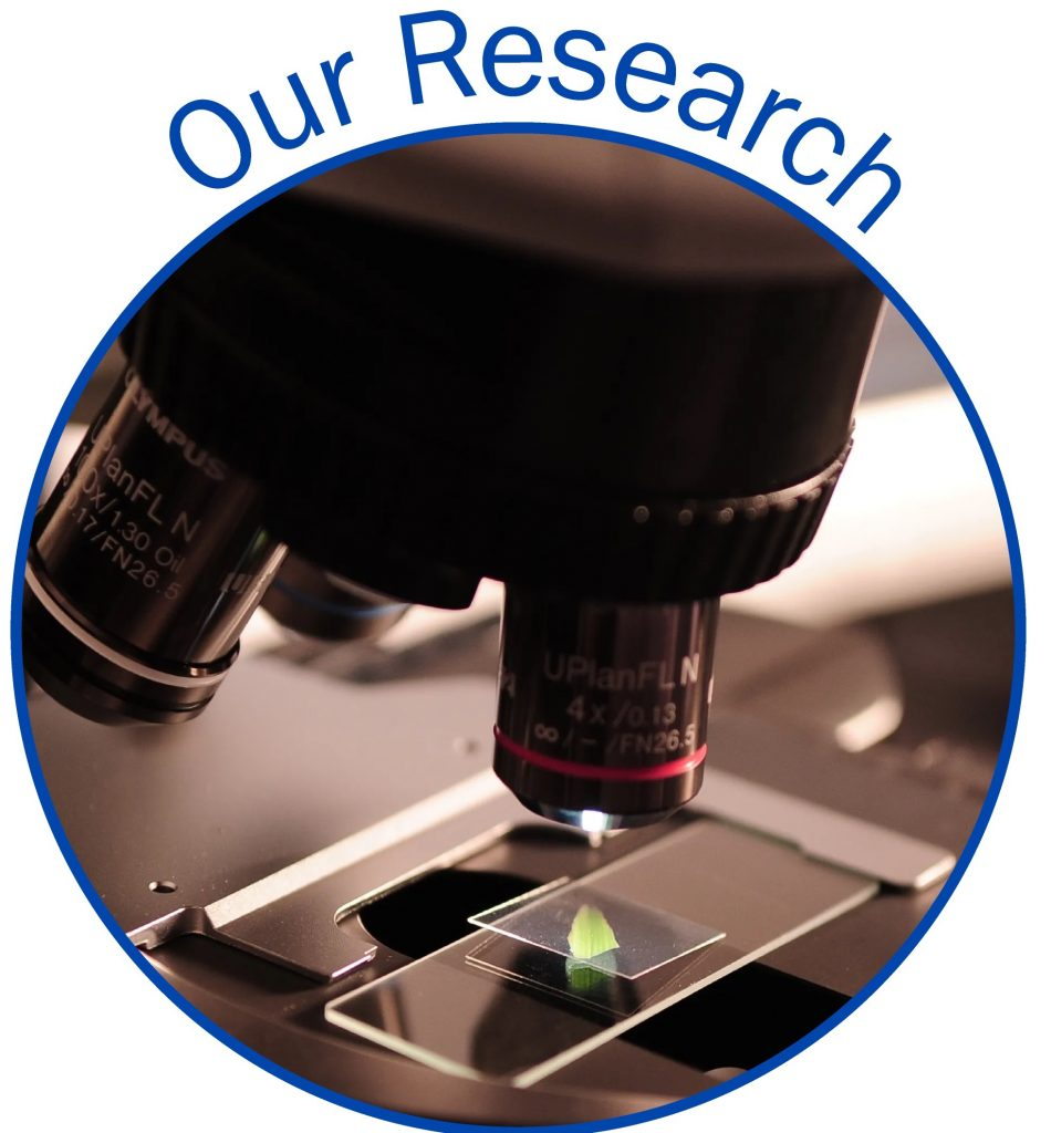 About our research
