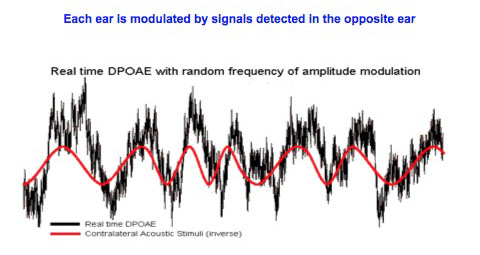 Amplitude modulation in real time DPOAE measurements.