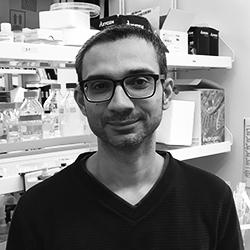 Ruku Ali (Postdoctoral Fellow)