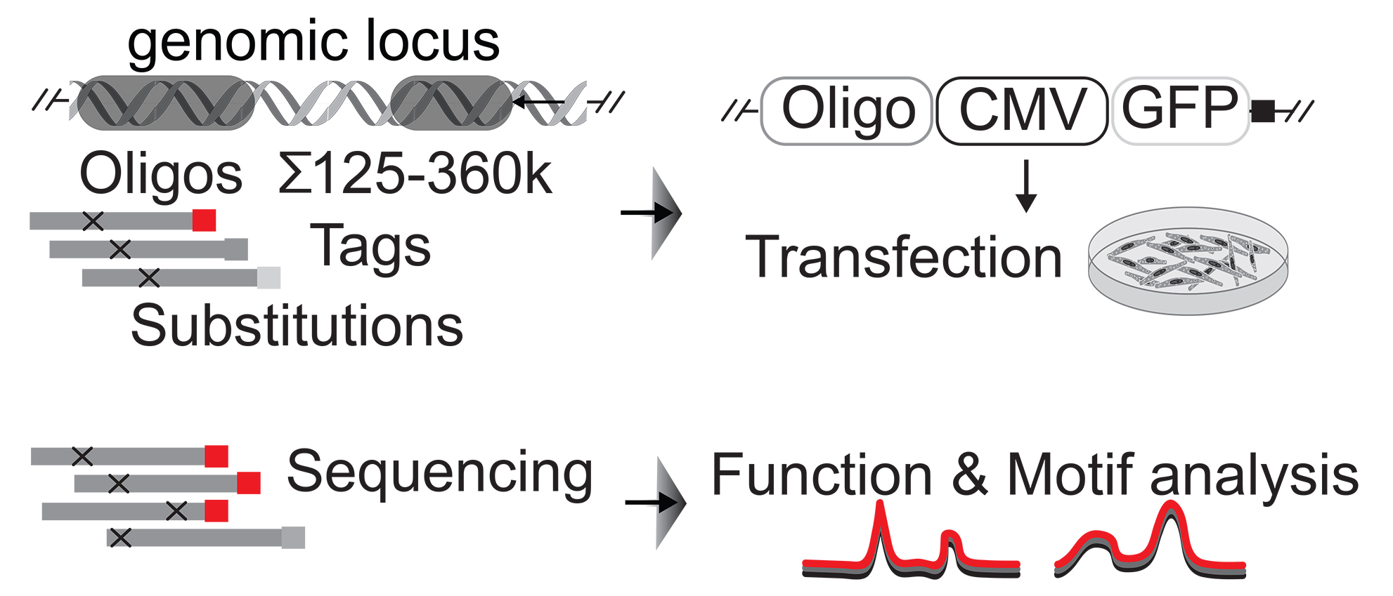 Massively parallel reporter assay (MPRAs) leverage thousands of oligonucleotides to determine regulatory DNA sequence elements in a genomics high-throughput approach.