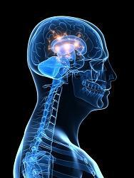 37522-shutterstock_brain-and-spine