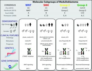 Molecular subgroups of medulloblastoma with details on demographics, clinical features, genetics and gene expression information