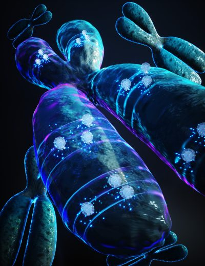 3D chromosome illustration with small clocks throughout